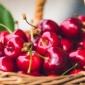 Inizia la distribuzione delle prime ciliegie di Vignola
