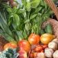 E' possibile ordinare la verdura sfusa della SCIAREDA